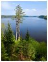 Смоленское поозерье. Озеро Сапшо.