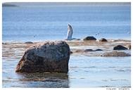 Белое море. Соловецкие острова.