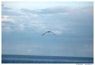 Архангельская область. Белое море. Соловецкие острова.